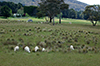 Spring_pastures_of_Hampton_Springs